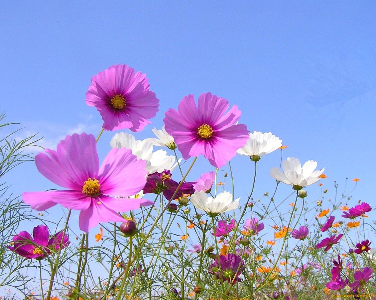 Картинки широкоформатные лето полевые цветы